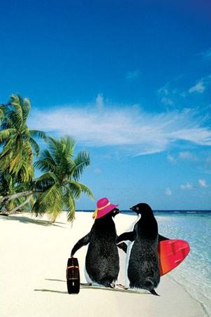 Penguin Paradise - Penguins on Holiday