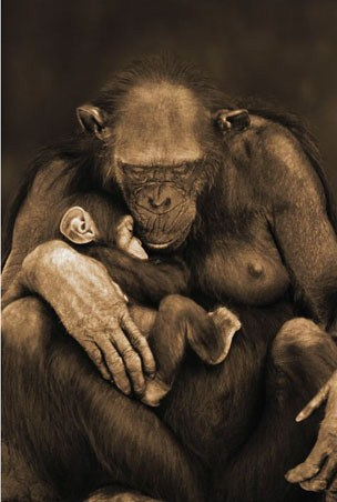 Framed Motherhood - Chimpanzee with Child
