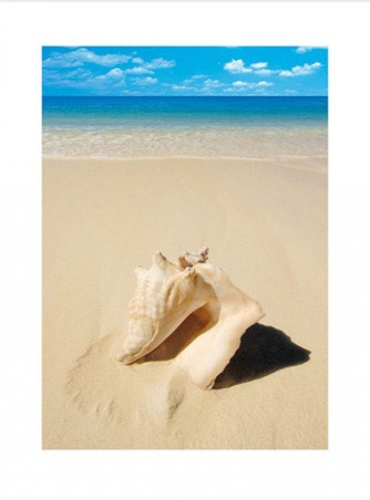 Beach Shell - Conch on the Sand