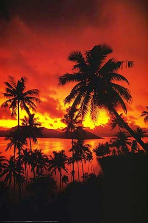 Palm Tree Sunset - Tropical Photography