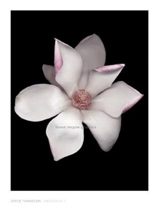 Magnolia I - Joyce Tenneson