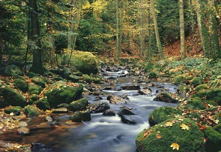 Forest Stream - 8 Sheet Woodland Wall Mural
