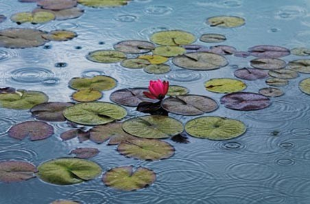 Water lilies by Hank Gans - Plant life Mini Mural