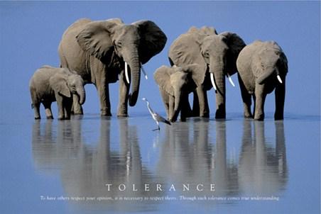Through such Tolerance comes true Understanding - Tolerance