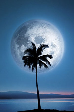 Dreamland - Palm Tree against the Moon