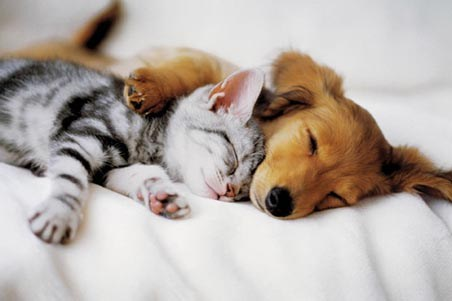 Cuddles - Kitten and Puppy