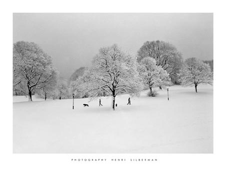 Prospect Park Trees - by Henri Silberman